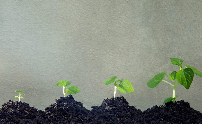 只有癒合的傷口,才能長出新的根重生