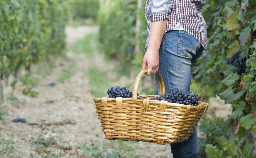 我們都是葡萄園的工人
